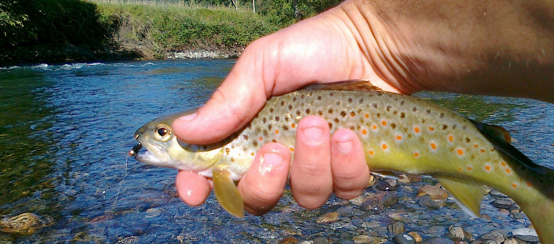 FLY FISHING Pyrénées Pêche à la mouche dans les Pyrénées